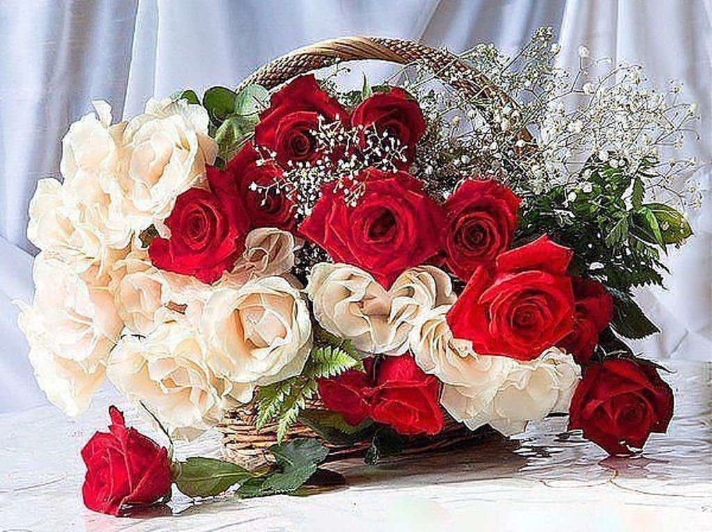 фильмы гифы букет роз с пожеланием хорошего дня его детей пошли